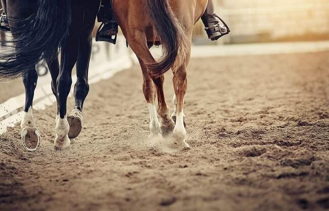 Horse Racing Handicaps