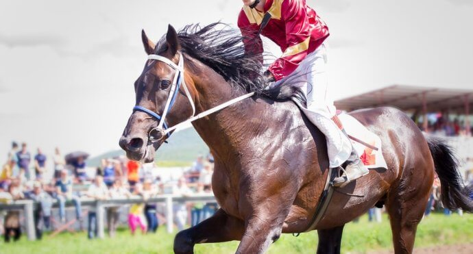 Top Horse Racing Trainers – Best* Trainers to Watch